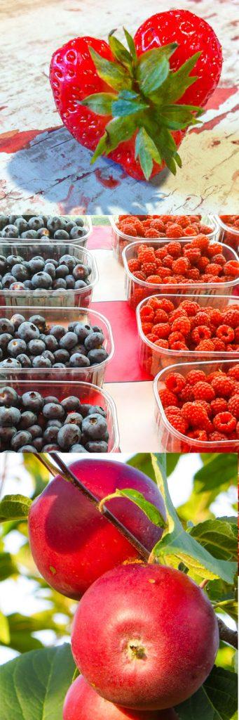 Mansikoita, pensasmustilkoita, vadelmia ja omenia.